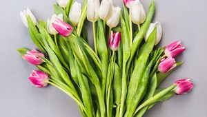 Tulips-Spring